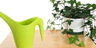 Annaffiare le piante d'appartamento in modo corretto