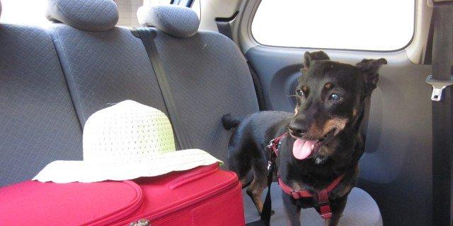 In vacanza con il cane: consigli e regole