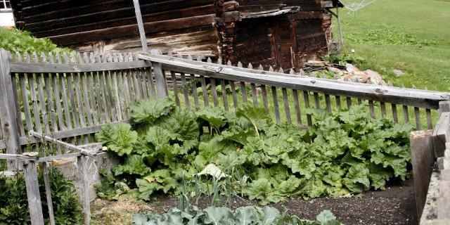 Curare l'orto prima di una breve vacanza
