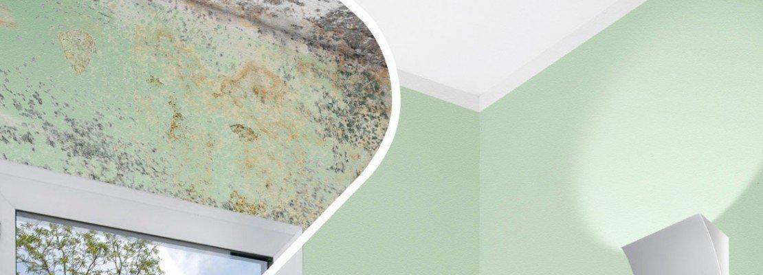 Muffa sulle pareti cose di casa - Scritte sulle pareti di casa ...