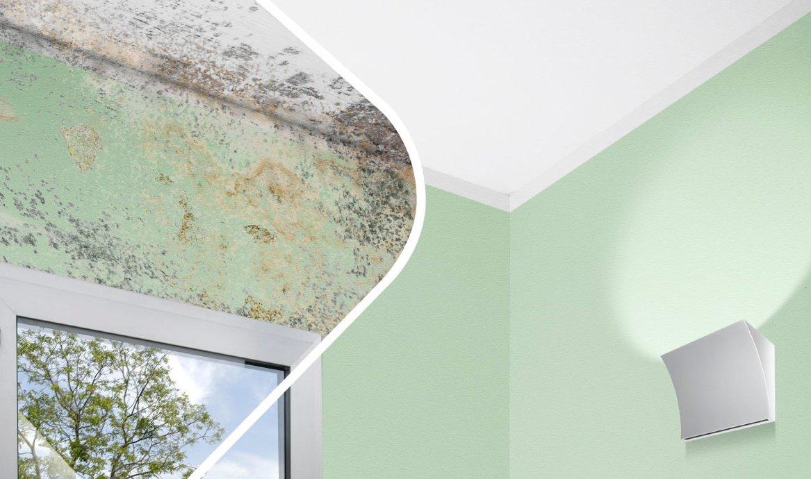 Togliere la muffa dalle pareti cose di casa - Come togliere la muffa dalle pareti di casa ...
