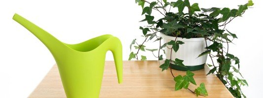 Fiori giardino balcone e terrazzo green arredamento for Annaffiare le piante