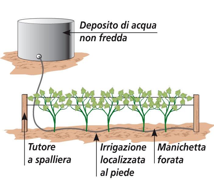 I cetrioli entro giugno si seminano nell orto cose di casa for Irrigazione per sommersione