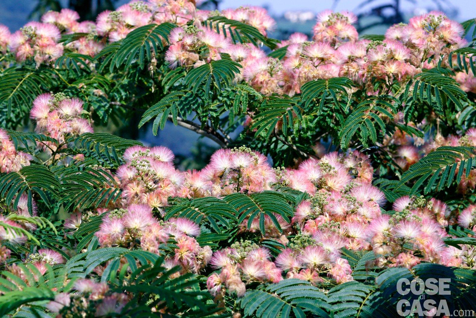 Alberi Ad Alto Fusto Quali Sono alberi per l'ombra in giardino? scegli le piante giuste