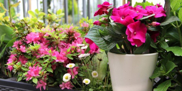 I prodotti che bagnano le piante al posto nostro