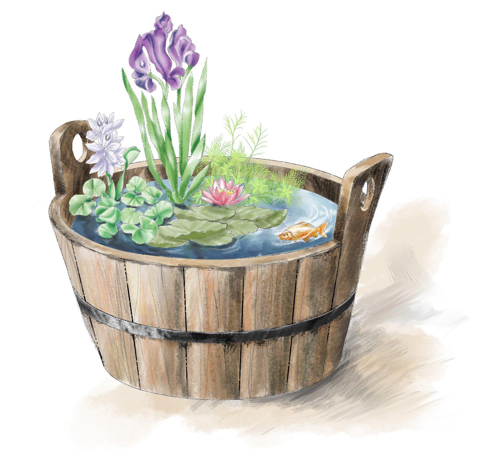 Un mastello di piante acquatiche cose di casa for Contenitore per pesci