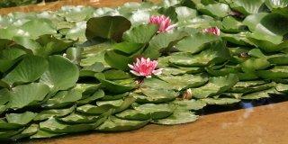 Un mastello di piante acquatiche