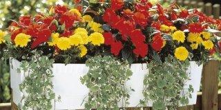 vaso con fiori gialli e rossi