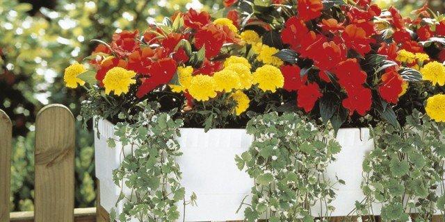 Impianto di irrigazione per i vasi in balcone