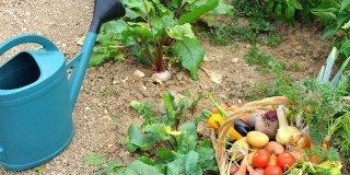 annaffiare orto e raccolta verdure