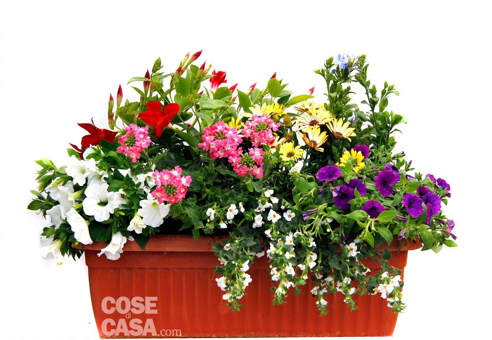Sul davanzale una cassetta fiorita tutta l 39 estate cose for Piante da fioriera