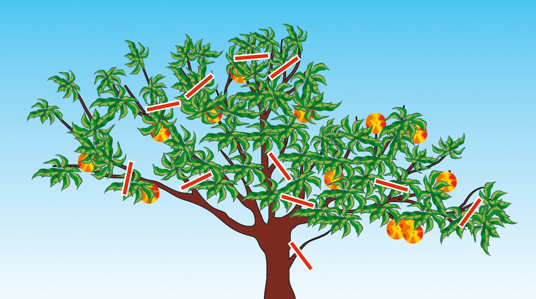 Potare gli alberi da frutto cose di casa for Potatura pesco