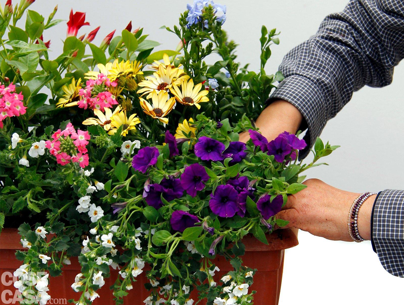 Composizione Vasi Da Balcone sul davanzale una cassetta fiorita tutta l'estate - cose di casa