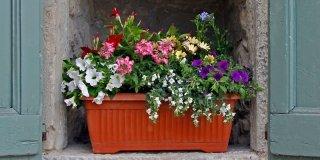 Sul davanzale una cassetta fiorita tutta l'estate