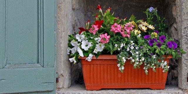 Sul davanzale una cassetta fiorita tutta lestate