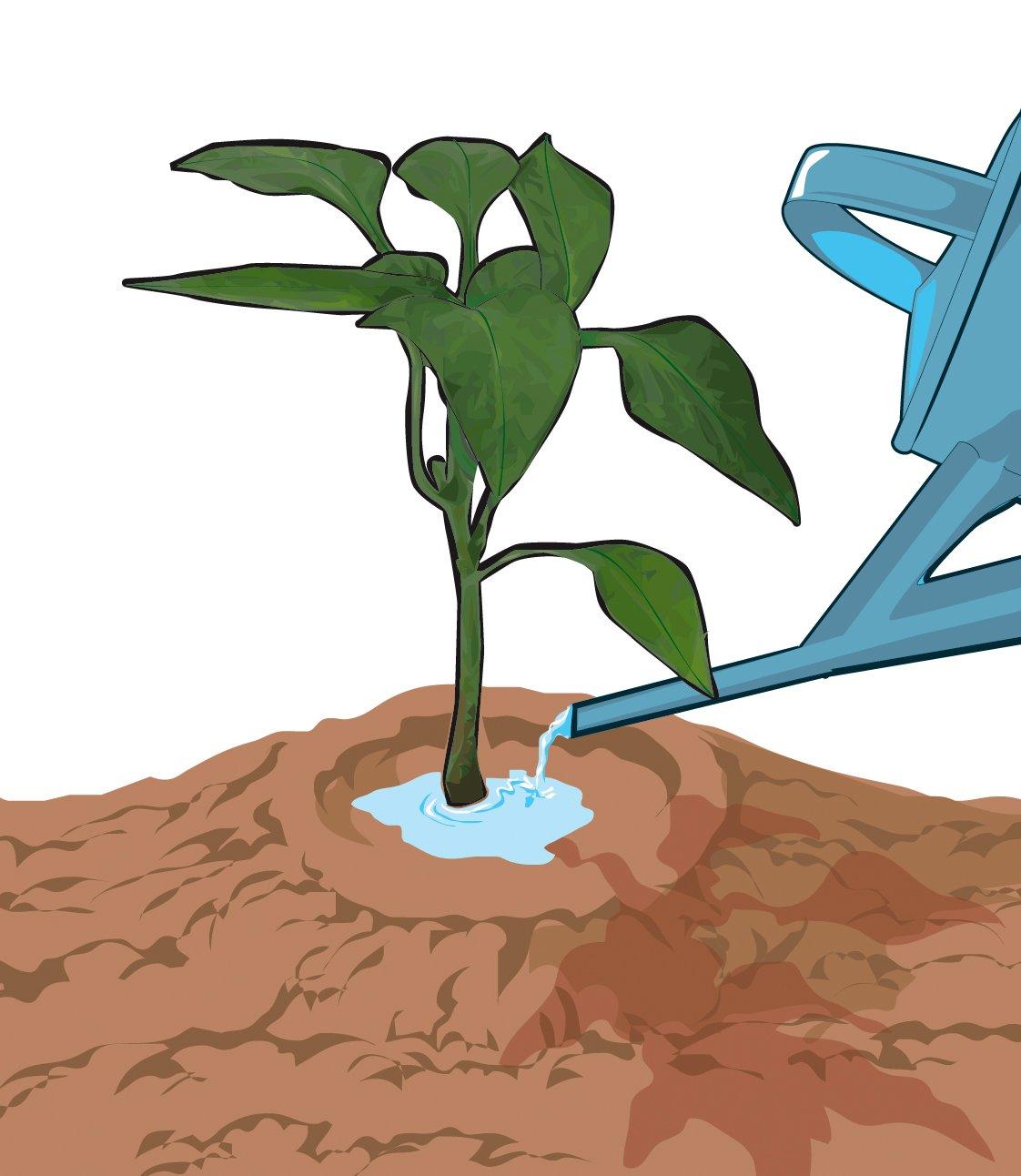Orto come irrigare d estate cose di casa for Irrigazione a goccia per pomodori