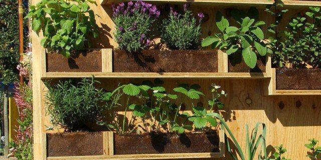 Una parete di aromatiche in balcone