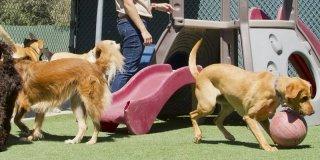 pensione cani