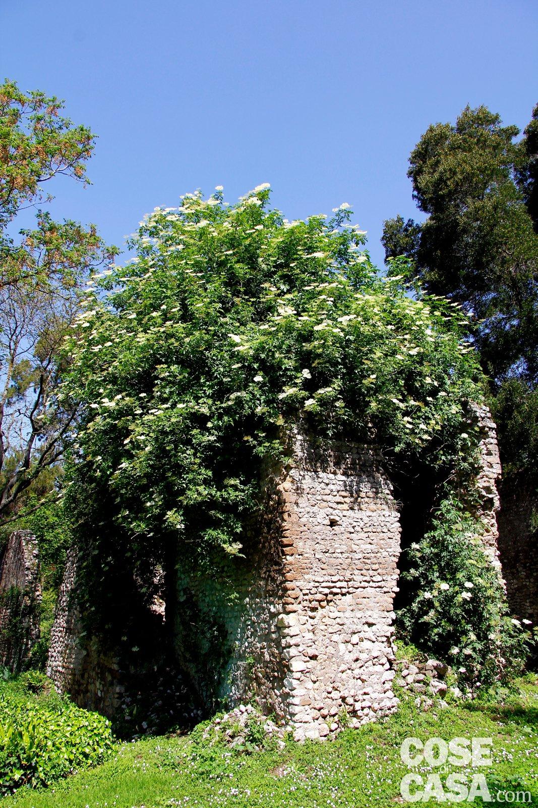 giardino di ninfa alla scoperta delle piante cose di casa