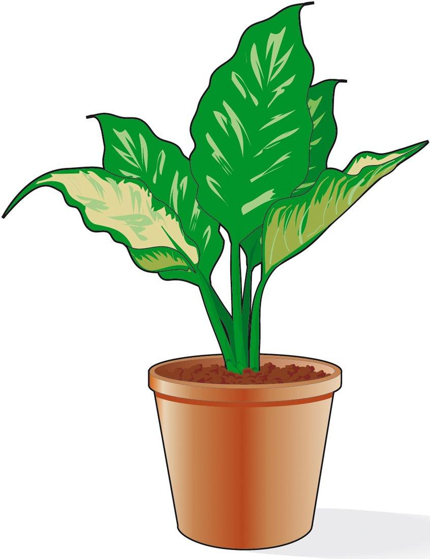 Potare la dieffenbachia se si spoglia alla base cose di casa for Terriccio per limoni in vaso