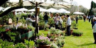 Tre mostre di giardinaggio per un fine settimana verde
