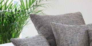 pianta in appartamento vicino divano