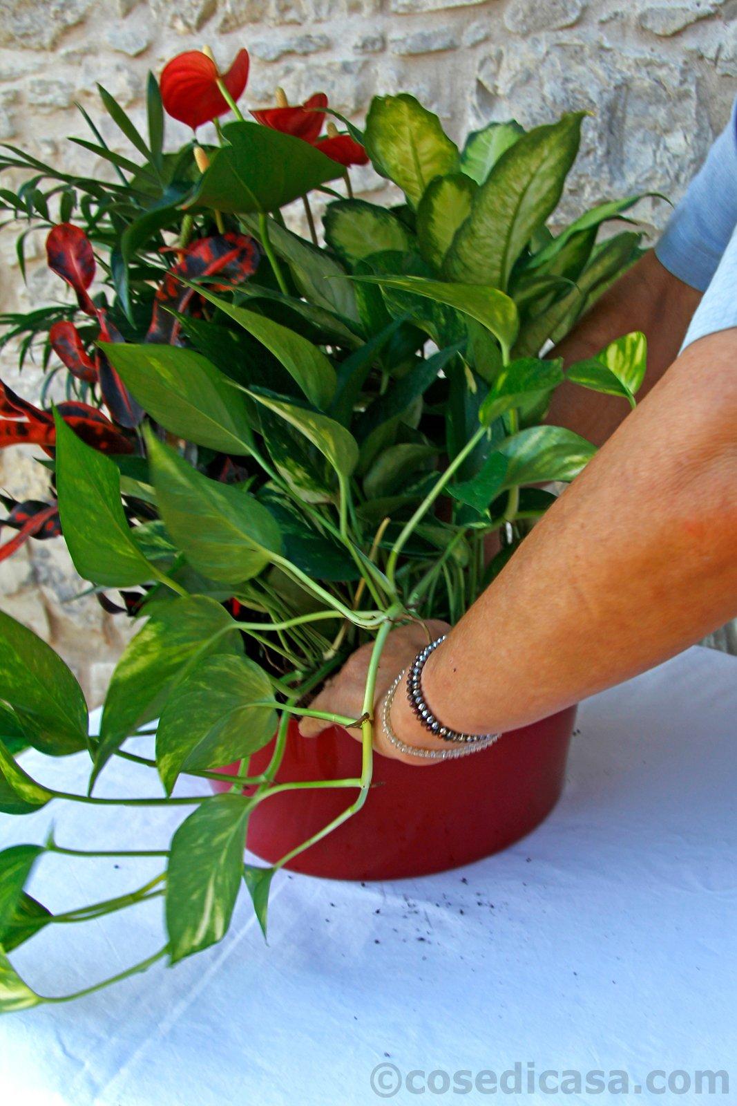 La composizione di piante d appartamento da mettere in for Piante da appartamento fiorite