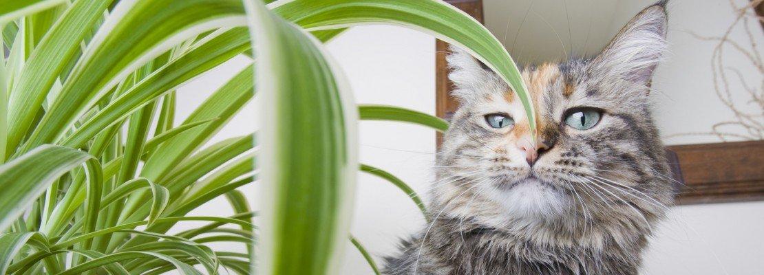 Convivenza pacifica tra piante e gatti di casa cose di casa - Gatto defeca per casa ...