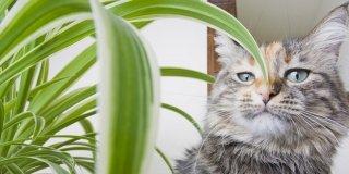 gatto vicino pianta