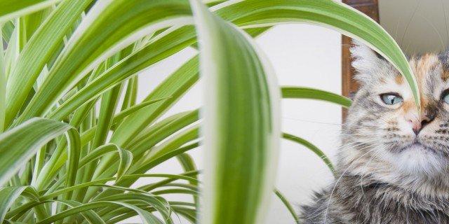 Piante Da Appartamento Tossiche Per I Gatti.Convivenza Pacifica Tra Piante E Gatti Di Casa Cose Di Casa