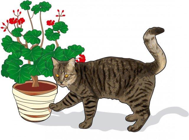 """3. La superficie esterna del vaso si può ricoprire completamente con nastro biadesivo: quando il gatto si avvicina avrà la sensazione di """"appiccicoso"""" sul pelo che gli risulta particolarmente sgradevole Eviterà di avvicinarsi nuovamente."""