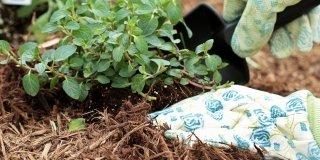 pacciamatura piante