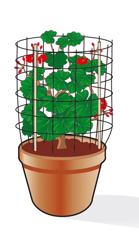 4. Infine, si può sagomare una griglia o una retina di plastica intorno al vaso, fissandola a stecche di legno o a cannucce inserite nel terreno.