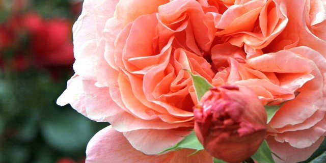 Piante da appartamento e da giardino cose di casa for Un rampicante fiorifero