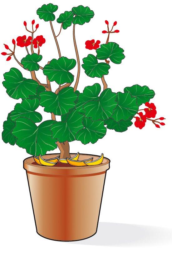 1. Sistemare alcune scorze di limone o arancia intorno al colletto della pianta. Tali scorze vanno cambiate spesso: l'odore infatti allontana i gatti ma evapora velocemente. Contemporaneamente si può spruzzare la terra del vaso con succo di limone.
