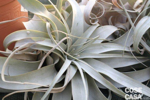 Le piante che purificano l aria di casa cose di casa - Piante che purificano l aria in casa ...