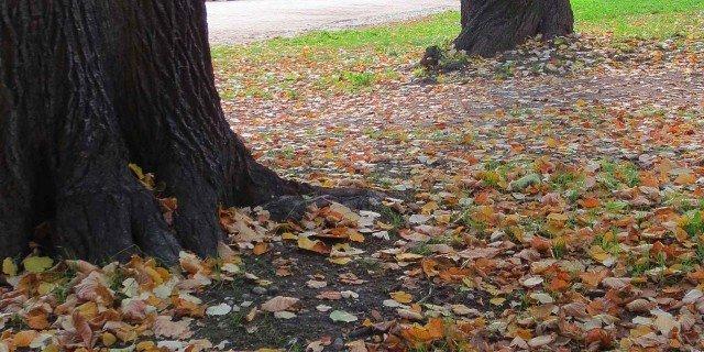 Autunno: Perché Cadono Le Foglie?