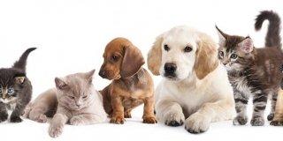 cuccioli cani e gatti