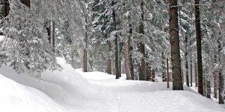 Lo spettacolo del bosco d'inverno