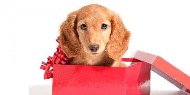 Un cucciolo in regalo