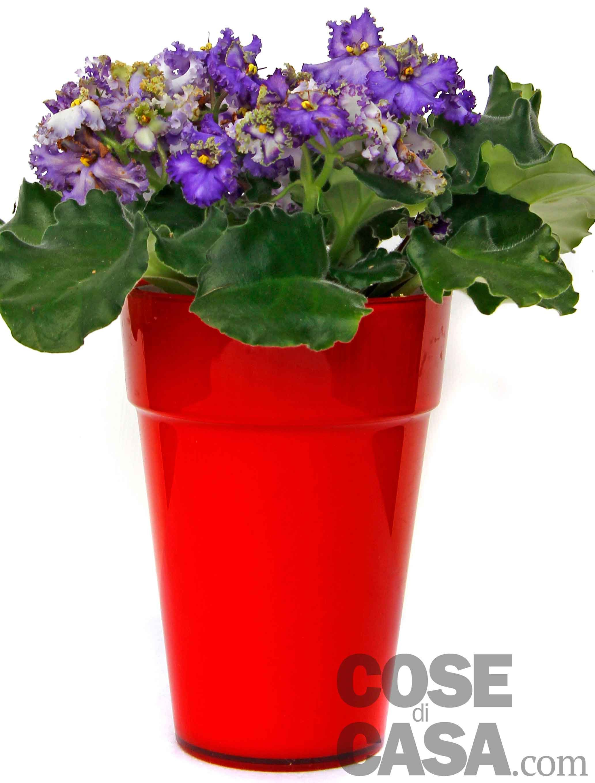 piante da regalare a meno di 15 euro cose di casa