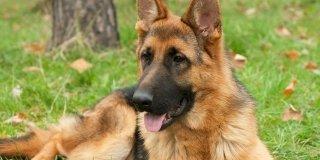 Conosci bene il tuo cane? Scoprilo con il TEST