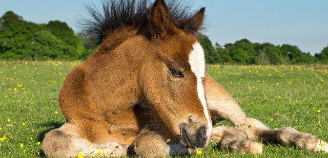 Come Costruire Un Cavallo.Un Cavallo Per Amico Cose Di Casa