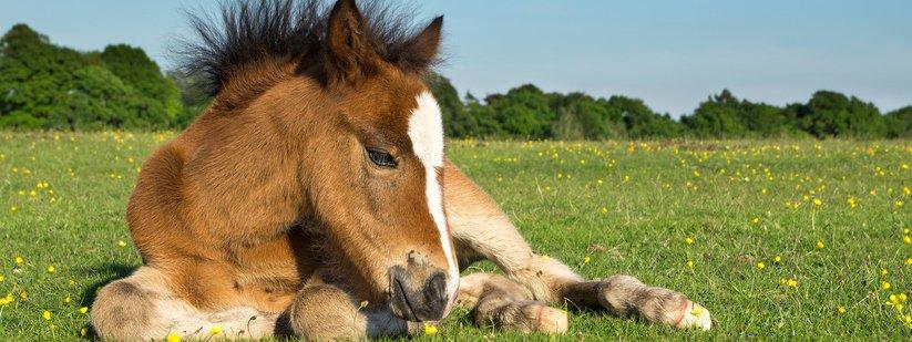 Un cavallo per amico cose di casa for Cavalli arredamento