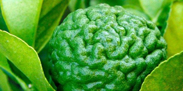 Citrus hystrix – Combava