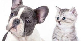 Cane e gatto: i luoghi comuni da sfatare