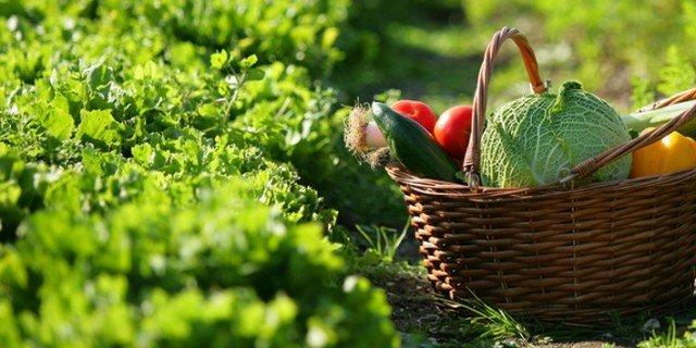La rotazione delle colture migliora il raccolto