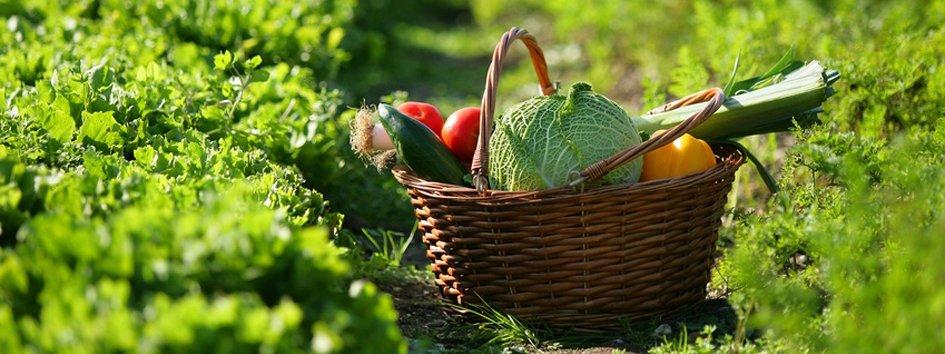 La rotazione delle colture migliora il raccolto cose di casa - Colture idroponiche in casa ...