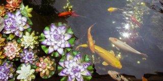 pesci in laghetto
