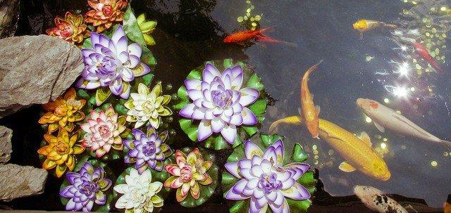 Nel laghetto pesci e non solo cose di casa for Animali laghetto